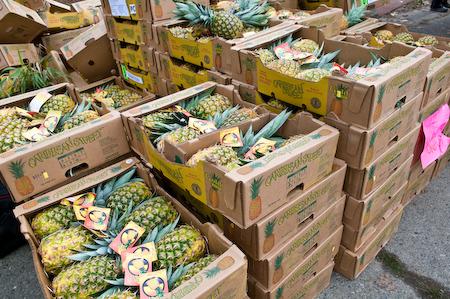 pineapple-10